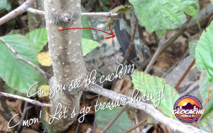 See the Cache